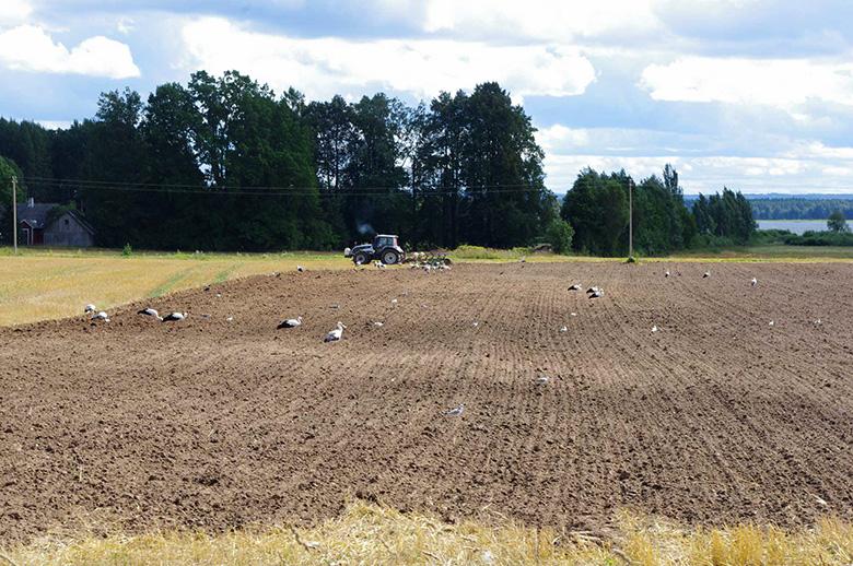 Ku hää maatükk om uma talo küle all, sis om põllumiis tuu iist nõun masma päält 4000 euro