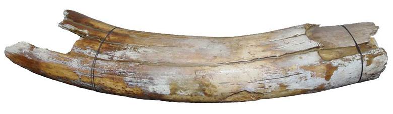 Mammutikihv
